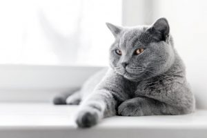 تتميز هذه القطة بالفرح والسعادة الدائمة