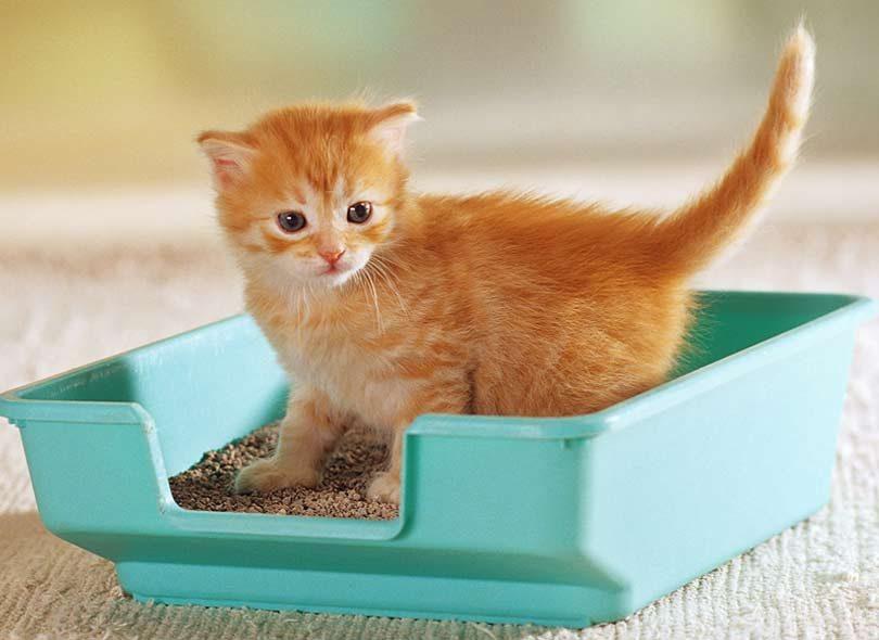 نصائح ومعلومات يجب أن تعرفها قبل شراء قطة