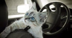 اصطحاب حيوانك الأليف في السفر