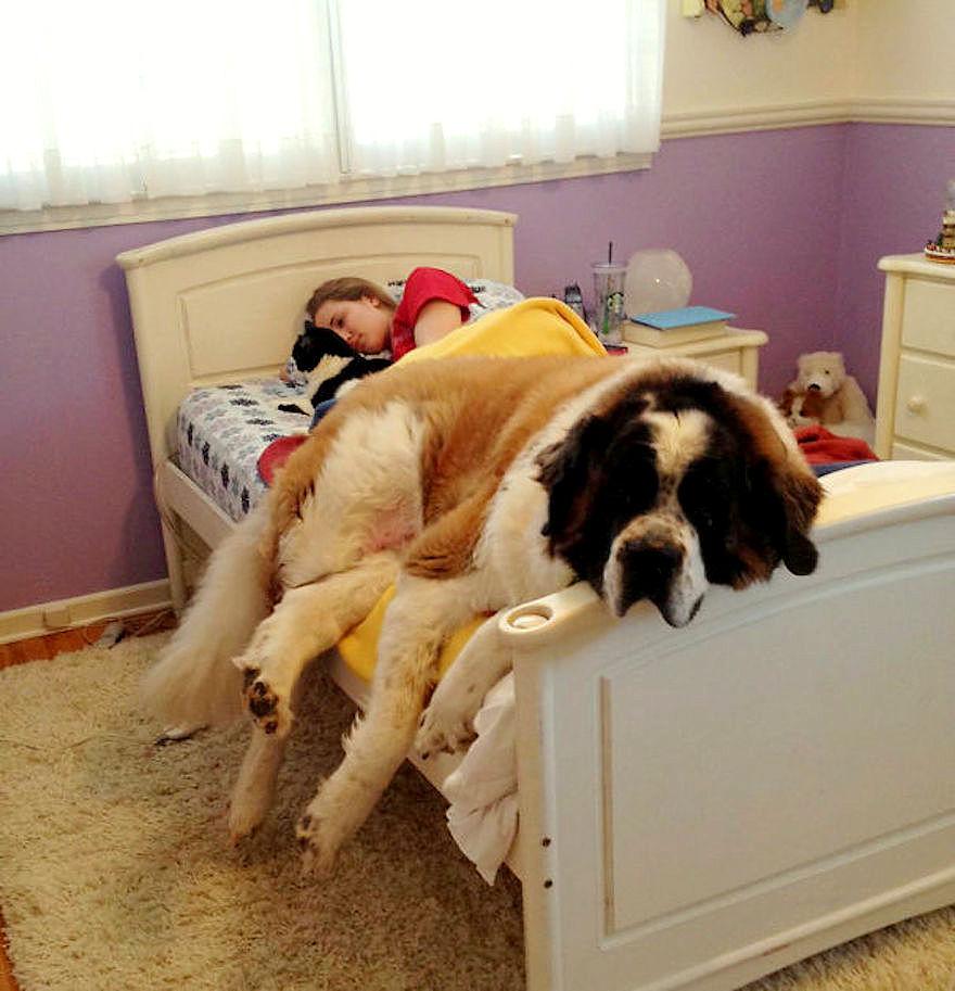 إذا كان كلبك ينام في سريرك.. توقف عن هذا فورًا