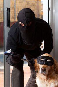 سرقة الكلاب