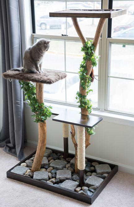 أشجار للقطط