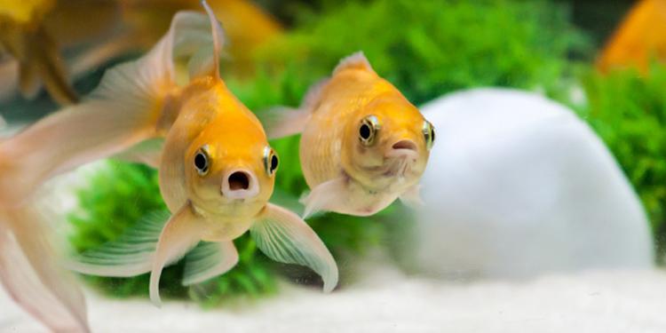 الإسعافات الأولية للأسماك