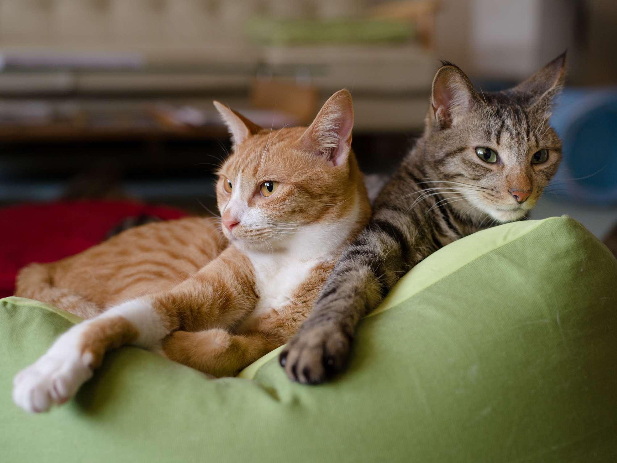 طبيعة القطط