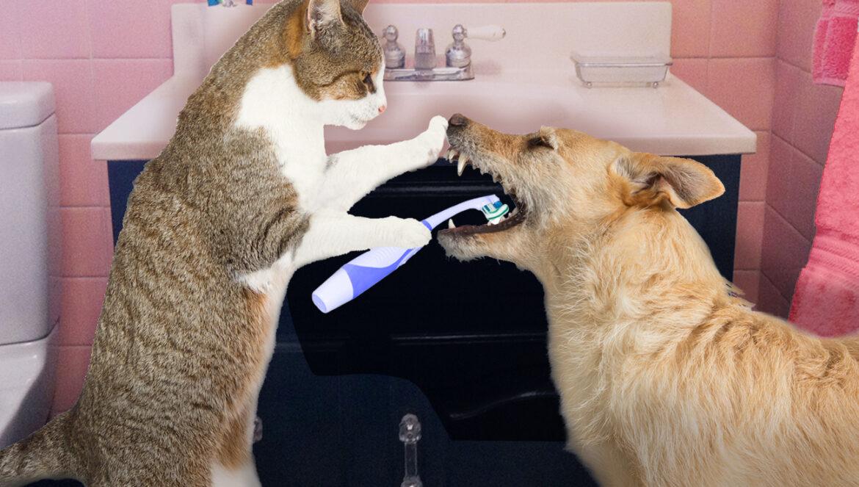 العناية بالأسنان للقطط والكلاب