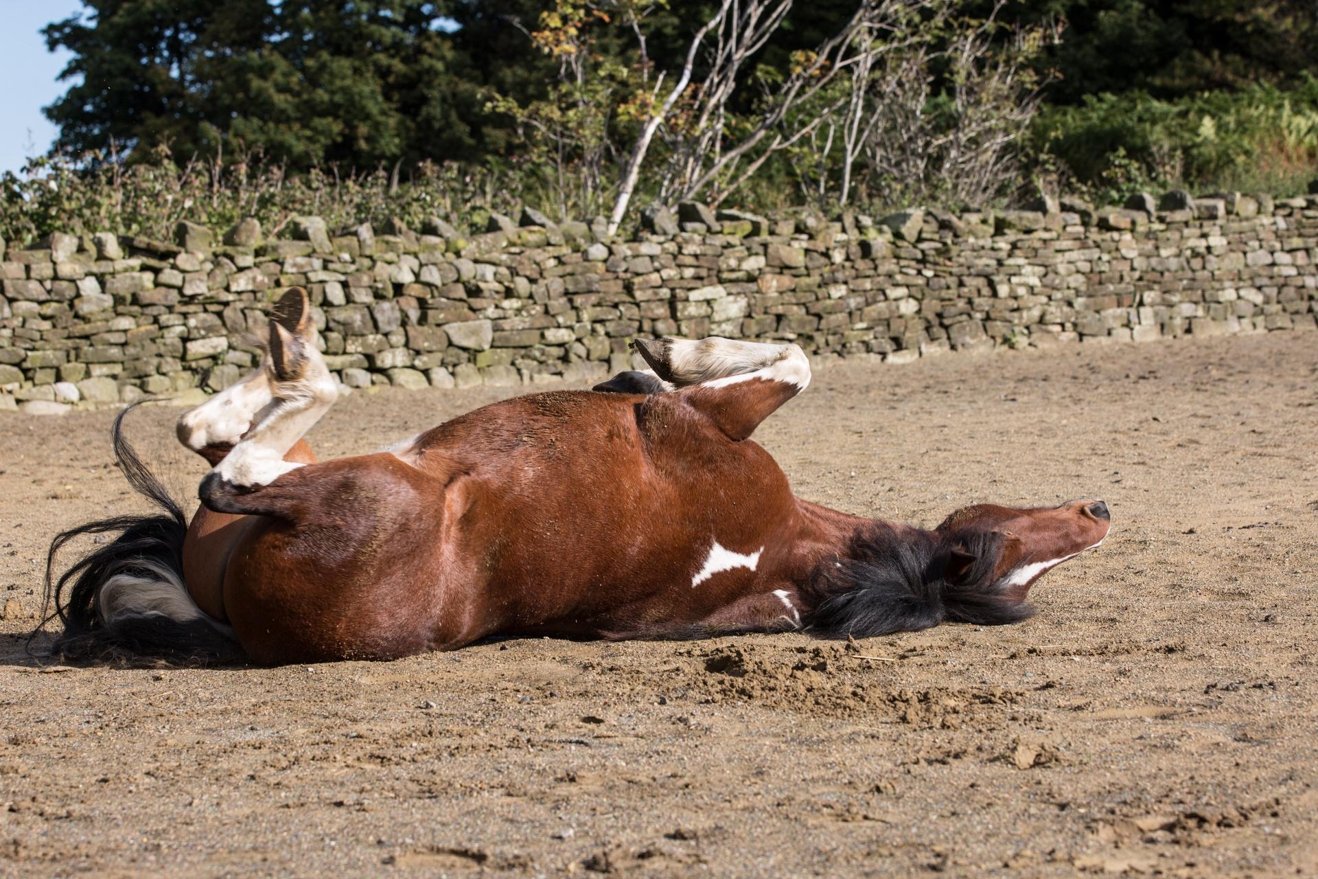 داء الكلب في الخيول