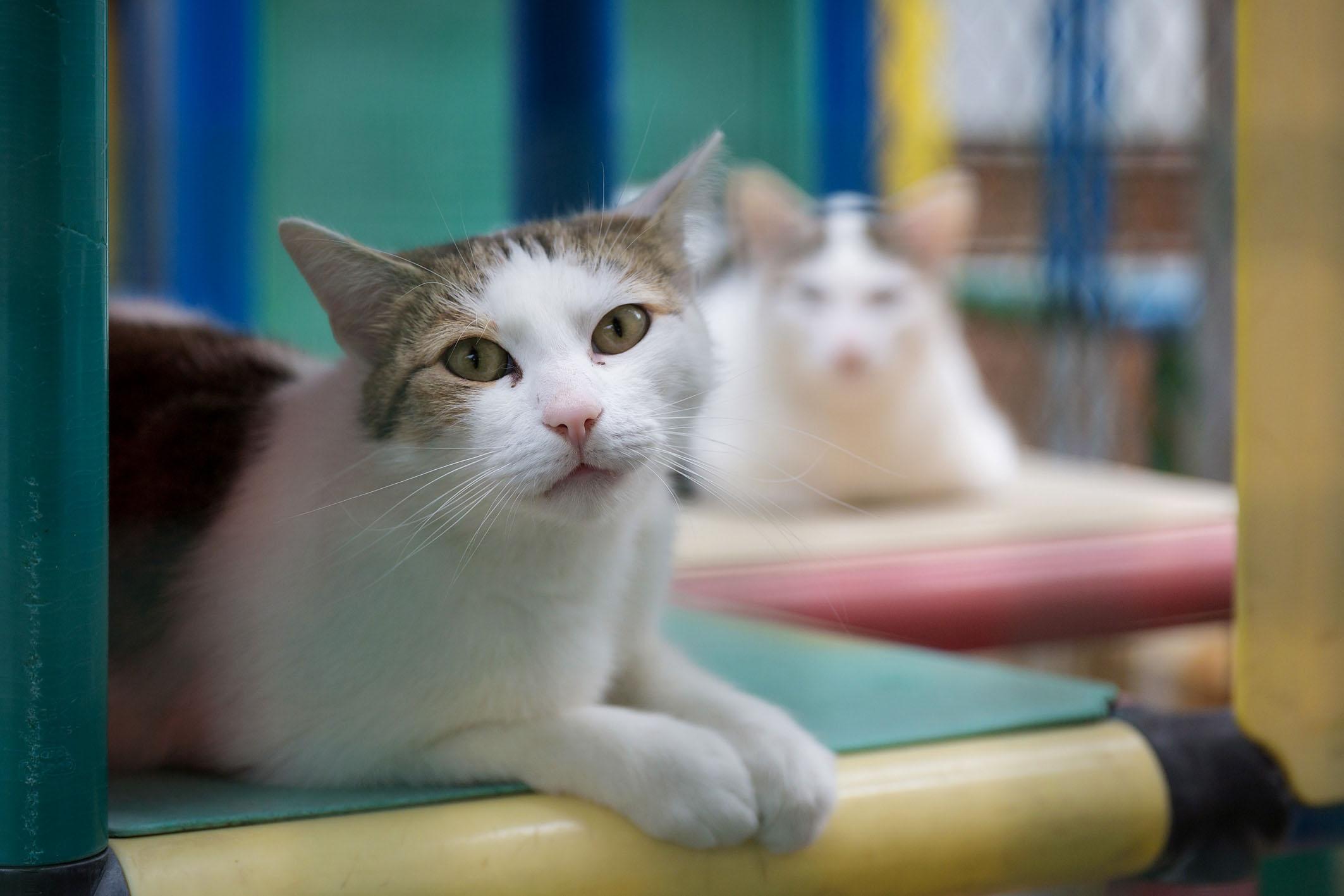 طفيل القطط