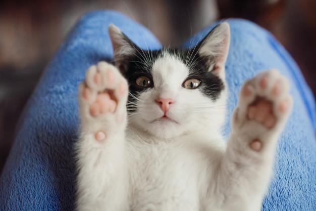 إزاي تربي قط في منزلك من غير خساير