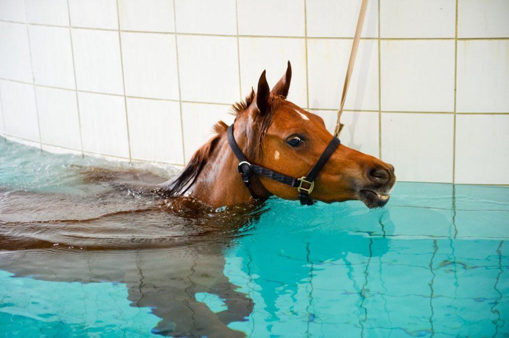 علاج الخيول بالسباحة