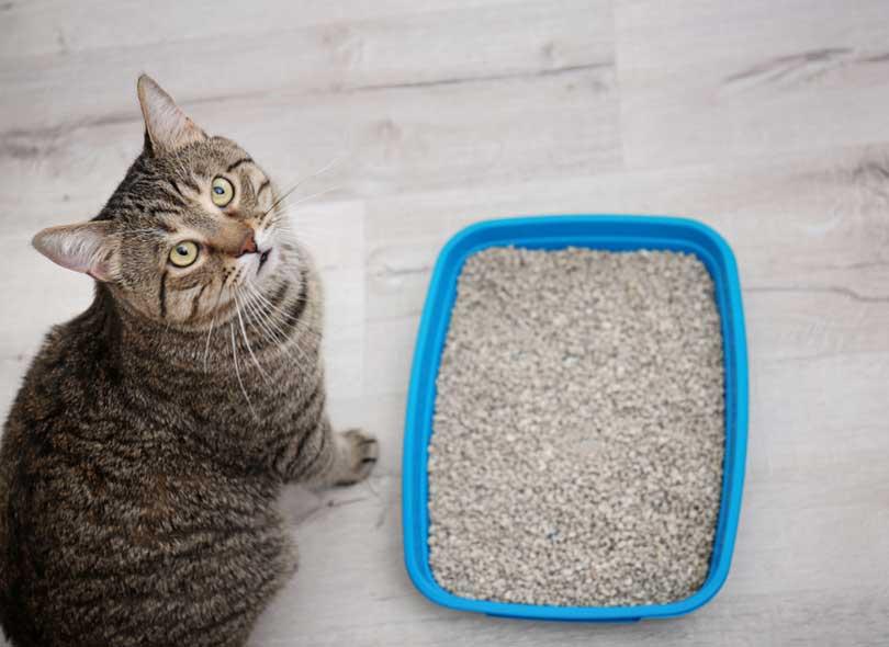 تدفن القطط برازها