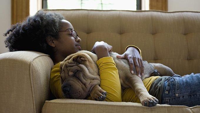 تحلم الكلاب