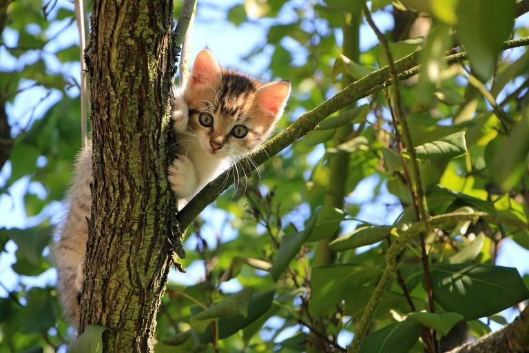 الجراء والقطط إلى أنظمة غذائية محددة