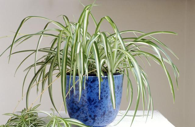 نباتات منزلية آمنة للقطط