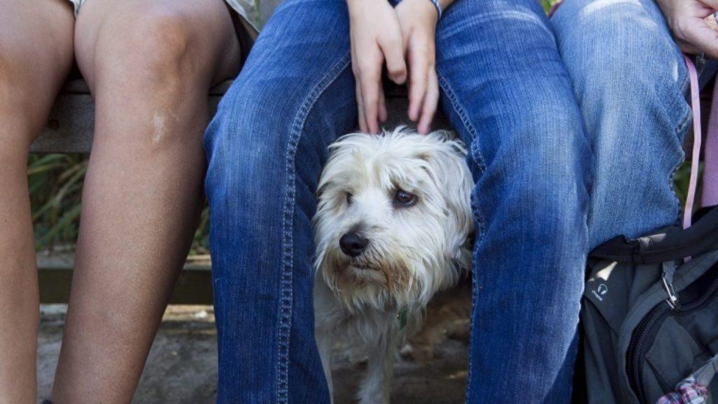 نوبات الهلع عند الكلاب