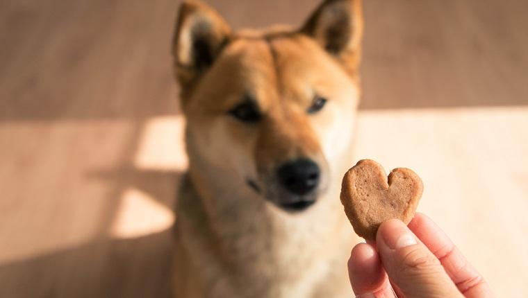 8 طرق للتعبير عن حبك لكلبك في عيد الحب