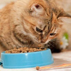 كم من الوقت يمكن للقطط البقاء بدون أكل؟