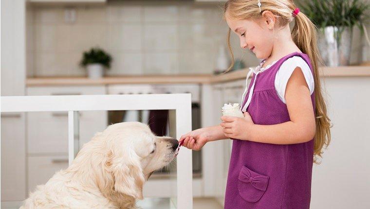 صحة الجهاز الهضمي للحيوانات الأليفة