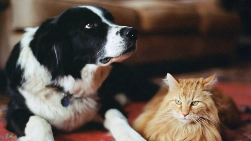 سلوك القطط عن الكلاب