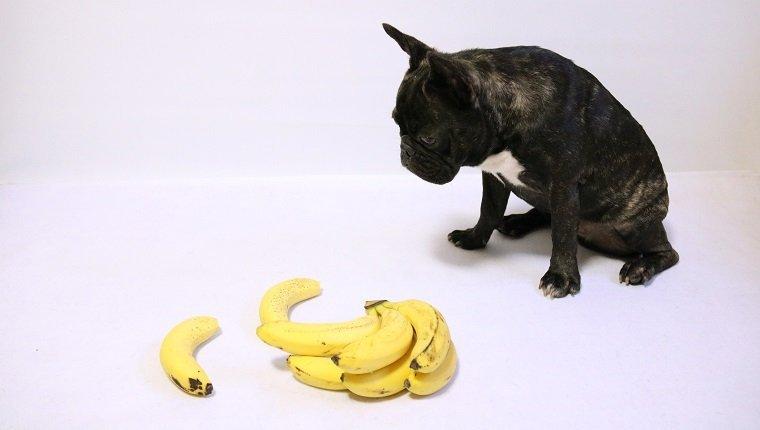 فوائد الموز للكلاب