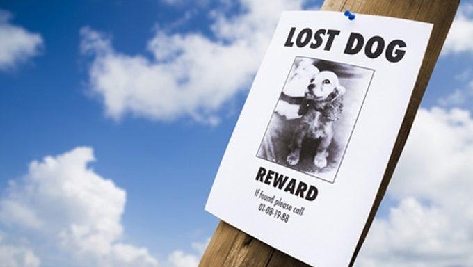 كيفية البحث عن كلب ضائع