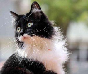إزاي تعرف أن قطتك من سلالة نقية