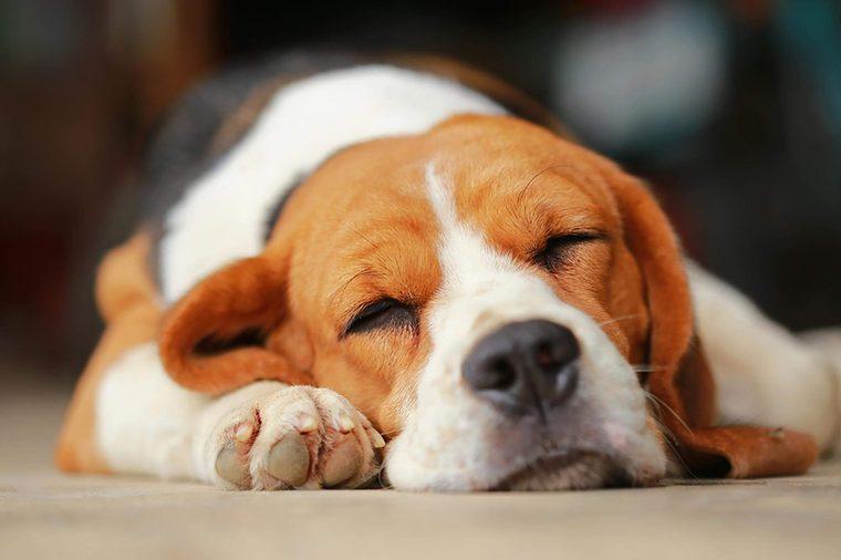 السلوك الغريب لكلبك