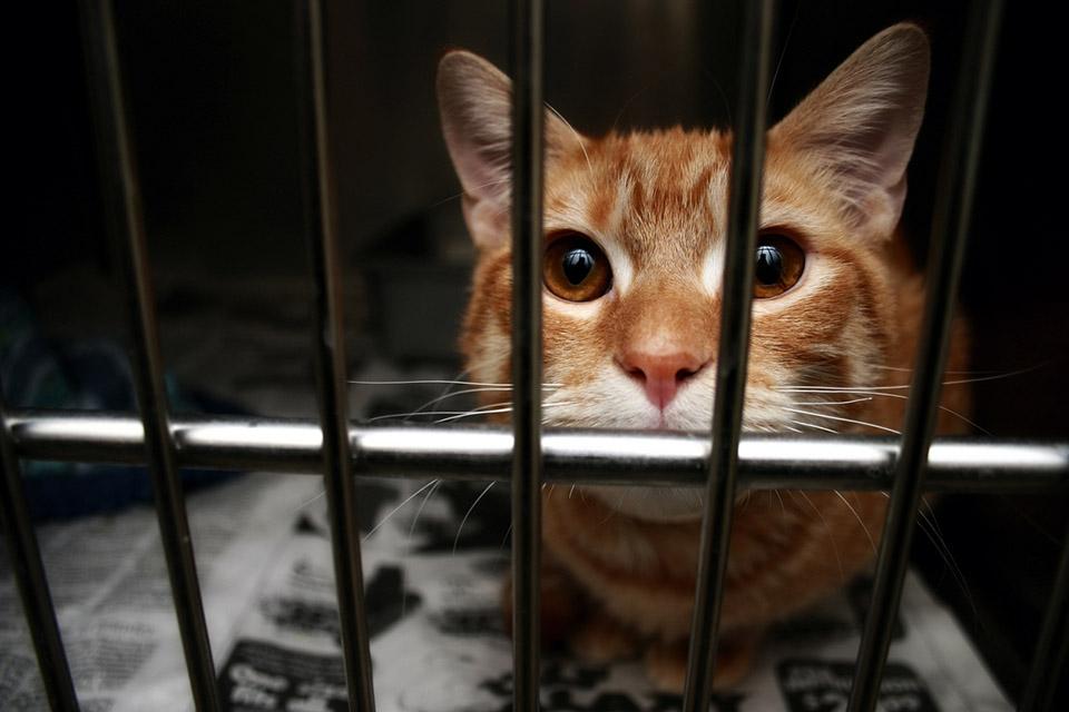 تحسين حياة القطط
