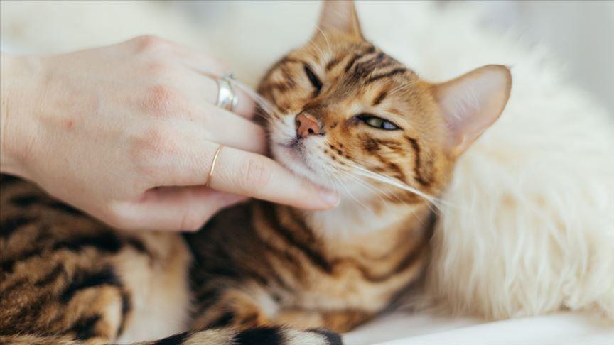 علامات الحب عند القطط